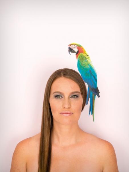Muursticker ara papegaai